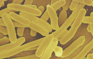 Darmbakterien Gesundheit Darmflora Fakten