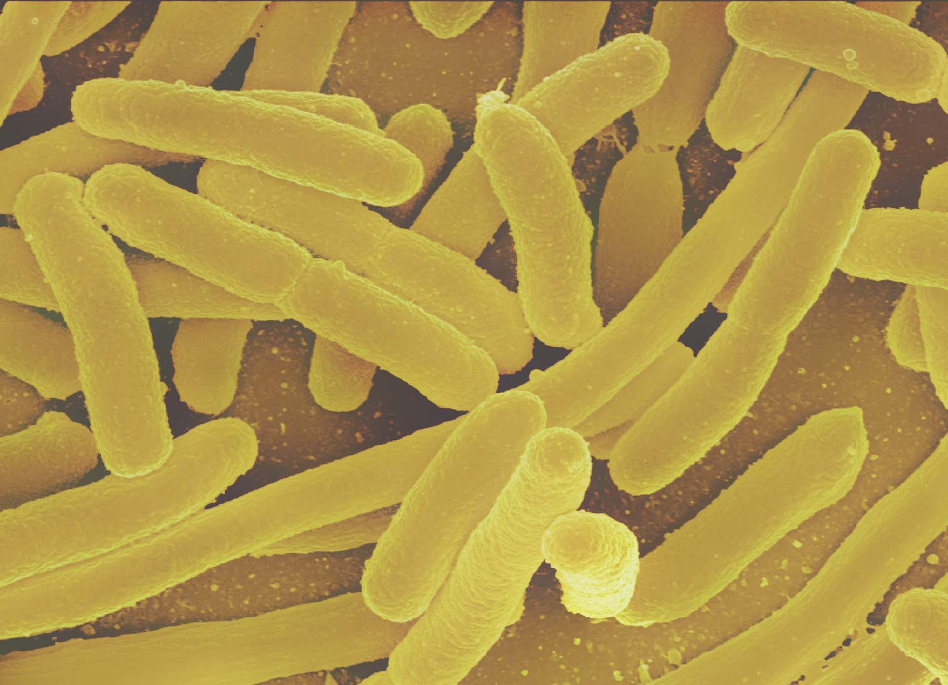 10 Fakten über Darmbakterien
